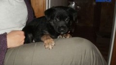Kanalia – widział jak szczeniaki dorastają i po 2 miesiącach wyrzucił do TOITOI-a! Pomocy!!