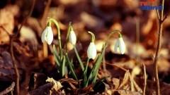 Wiosno, wiosno! Gdzie jesteś? fot. Michał Statkiewicz 2013-03-21