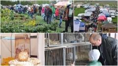 Zapraszamy na VIII Wiosenne Targi Ogrodnicze w Starym Polu - 22-23.04.2017