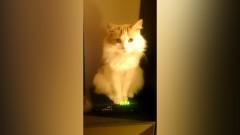 Malbork: Titul wrócił do domu. Właścicielka dziękuje wszystkim, którzy pomogli w odnalezieniu kota – 24.04.2017