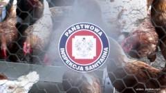 Drób skażony fipronilem trafił do sprzedaży w Malborku i Sztumie – 21.08.2017