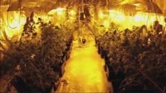 Zlikwidowano plantację marihuany i zatrzymano auta o wartości 250 tys.zł - 11.09.2017