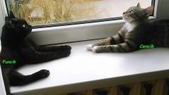 Uwaga Malbork! Szukamy domu dla dwóch kotków! Funcik i Cencik proszą o pomoc! - 27.09.2017