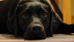 Malbork : Czy w mieście panuje wirus zagrażający psom? - 20.02.2018
