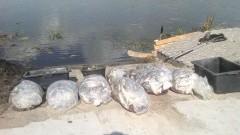 Ogromne skażenie i ok. tona śniętych ryb! Rzeka Dzierzgoń może być niebezpieczna dla ludzi