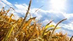 Malbork: Poszkodowani z powodu suszy mogą składać wnioski do Urzędu Miasta