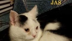 Zaginął kotek chory na serce. Pomóż odnaleźć zgubę udostępnij.