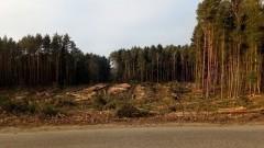 Przekop Mierzei Wiślanej: Zakaz wstępu do lasu w związku z prowadzoną wycinką drzew