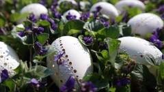 Stare Pole: Warsztaty Wielkanocne w GOKiS