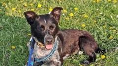 Saba porzucona w rowie. 3 tygodnie nikt nie zareagował na krzywdę psa.