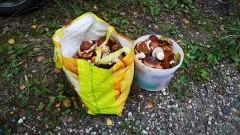 Kolejny grzybiarz odnaleziony w przygranicznym lesie