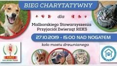 """Malbork: Bieg charytatywny dla """"Reksa"""". Przyjdź, pomóż bezdomnym zwierzakom."""