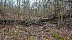 Przygotowania do sezonu w lasach Nadleśnictwa Elbląg.