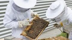 Zostań miejskim pszczelarzem w Malborku.