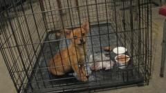 Kościeleczki: Jest już nowy właściciel. Znaleziono porzuconego szczeniaka, schowanego w plecaku !