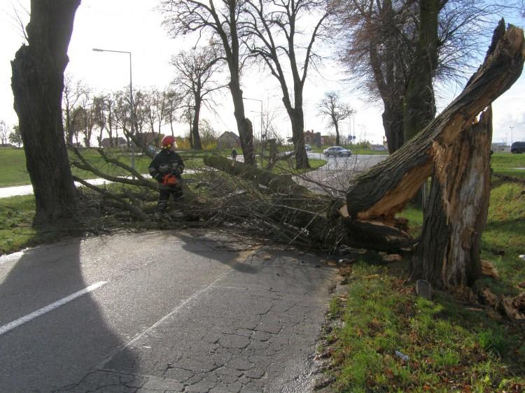 Cyklon Grzegorz w powiecie Malborskim. Silny wiatr wyrywał drzewa z korzeniami. Mundurowi podsumowali miniony weekend – 30.10.2017