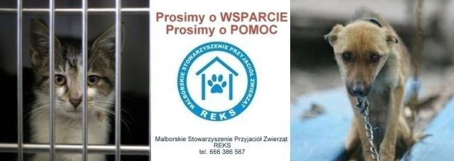 Każdy może pomóc podopiecznym Malborskiego Stowarzyszenia Przyjaciół Zwierząt