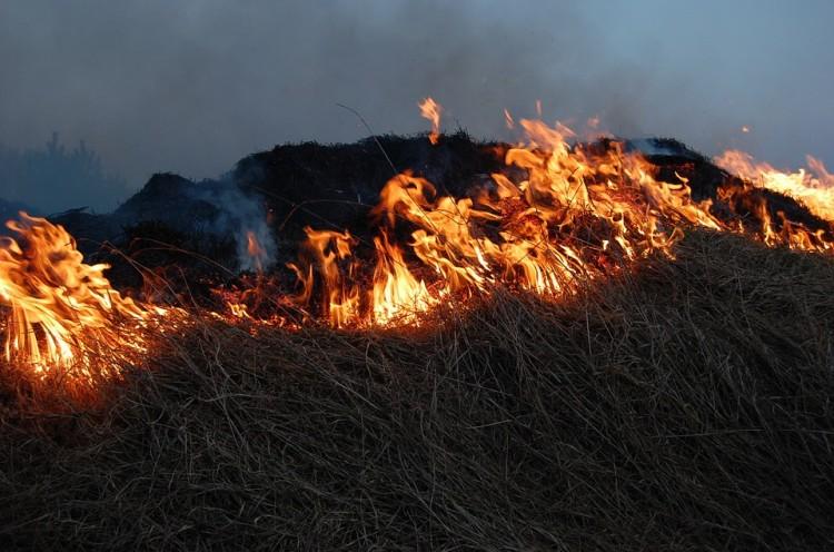 Uwolnienie Luny i pożary traw – weekendowy raport malborskich służb mundurowych.