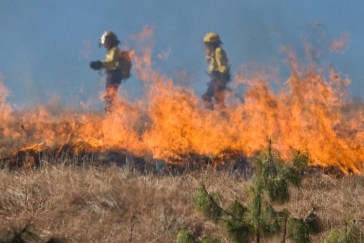 Policja przypomina - wypalanie traw jest niedozwolone!