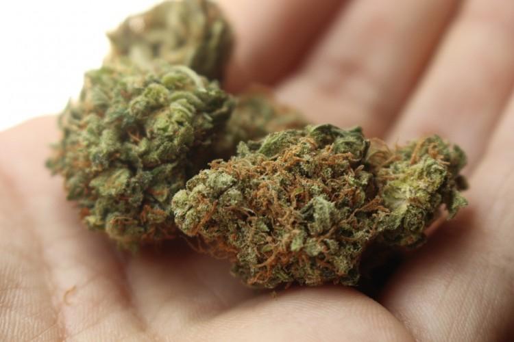 20 – latek z marihuaną zatrzymany w Starym Polu - weekendowy raport malborskich służb mundurowych.