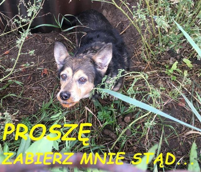 Pies w tragicznych warunkach. Malborski