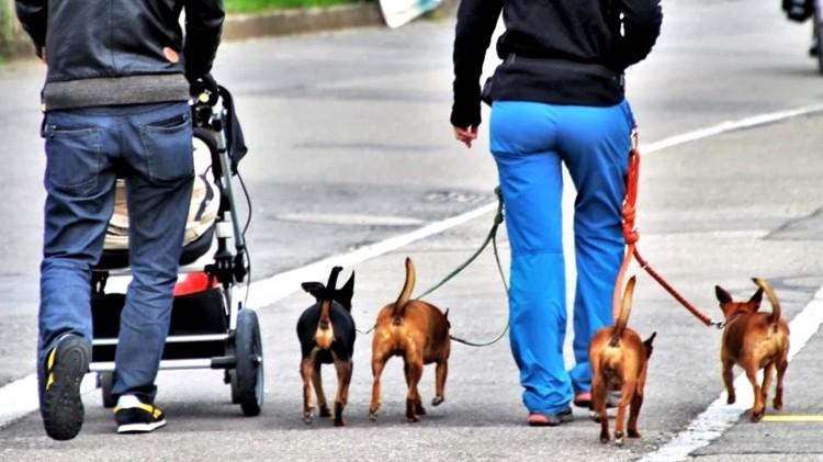 Mandat za brak smyczy na spacerze z psem. W sobotę wchodzą zaostrzone przepisy.