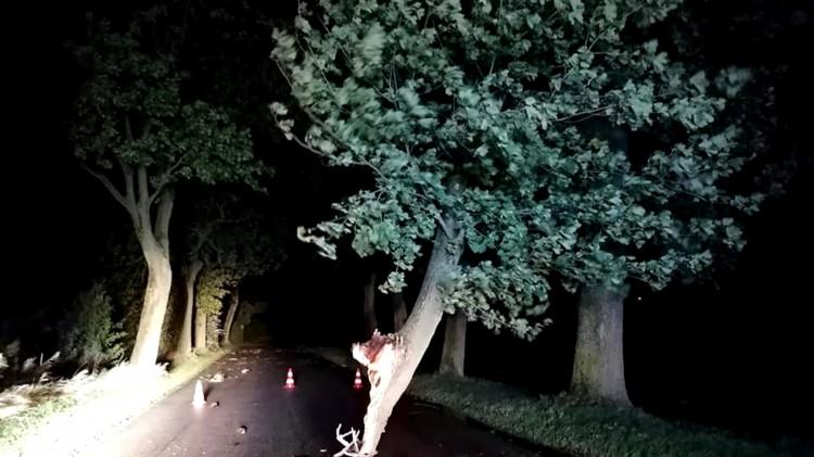 Powiat malborski. 14 interwencji strażaków do wiatrołomów.